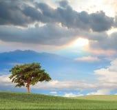 Bild der Nizza Landschaft Stockbild