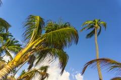 Bild der Palme-Tief-Winkelsicht Stockbild