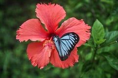 Bild der schönen Schmetterlings-Landung, die auf Blume sitzt stockbild
