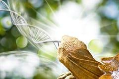 Bild der Schildkröte auf DNA-Strangs-Hintergrund Lizenzfreie Stockfotos