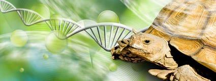 Bild der Schildkröte auf DNA-Strangs-Hintergrund Lizenzfreies Stockbild