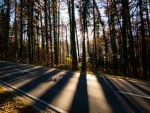 Bild der Straße durch den Wald während des Herbstes lizenzfreie stockfotos