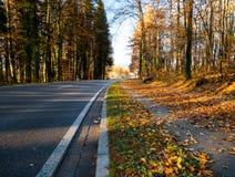 Bild der Straße durch den Wald während des Herbstes stockbilder