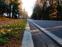 Bild der Straße durch den Wald während des Herbstes lizenzfreie stockfotografie