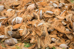 Bild der trockenen Kokosschale Stockfotos