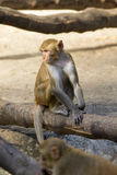 Bild des Affen sitzend auf einem Baumast Stockbild