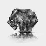 Bild des Bären, der in der Reflexion schaut Vektor Abbildung