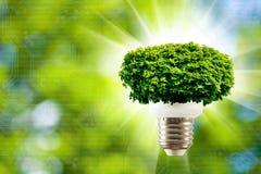 Bild des Baums in einer Glühlampe auf einer grünen Hintergrundnahaufnahme Stockbilder