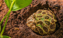 Bild des Frosches in der Lebensraumtageszeit Stockfoto