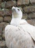 Bild des Geiers im Zoo Stockfotografie
