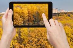Bild des gelben Holzes im Herbst auf Tabletten-PC Lizenzfreies Stockfoto