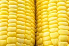 Bild des gelben Maishintergrundes, gesundes biologisches Lebensmittel, Bionahrung lizenzfreie stockfotos