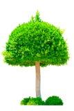 Bild des grünen Baums Lizenzfreie Stockfotos