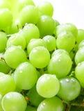 Bild des grünen Traubenhintergrundes Lizenzfreie Stockfotos