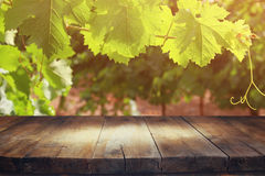 Bild des Holztischs vor Weinberglandschaft Stockfotografie