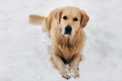 Bild des Hundes sitzend auf Schnee am Winterweg Stockbild