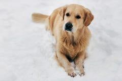 Bild des Hundes sitzend auf Schnee am Winterweg Lizenzfreies Stockfoto