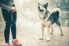 Bild des jungen Mädchens laufend mit ihrem Hund, alaskischer Malamute Stockbilder