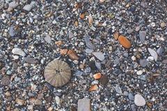 Bild des Kieselbeschaffenheitshintergrundes Pebble Beach mit Seeigel stockbild