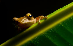 Bild des kleinen Frosches Stockbilder