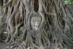 Bild des Kopfes von Buddha bei Wat Mahathat in Ayutthaya Stockbild