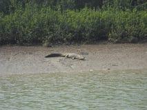 Bild des Krokodils stockfotografie