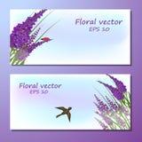 Bild des Lavendelfeldes lizenzfreie abbildung