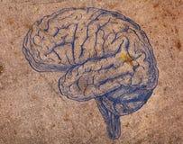 Bild des menschlichen Gehirns auf der veralteten Metallbeschaffenheit Stockfotografie