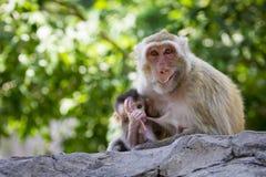 Bild des Mutteraffen und Baby albern auf Naturhintergrund herum Stockfotos