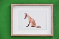 Bild des netten Fuchses auf Wand Stockbilder