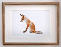 Bild des netten Fuchses auf Wand Lizenzfreies Stockfoto