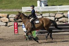 Bild des Pferds mit Reiter während des Wettbewerbs Lizenzfreie Stockbilder