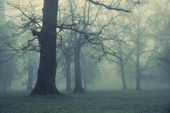 Bild des riesigen Baums im Wald stockfotos