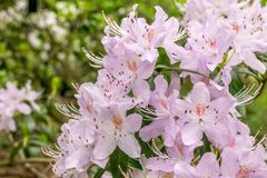 Bild des schönen Blumen-Weiß, Schuss an den königlichen botanischen Gärten, Kew lizenzfreies stockbild