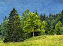 Bild des schönen grünen Waldes und der blauen Berge karpaten Lizenzfreie Stockbilder