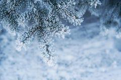 Bild des schneebedeckten Tannenbaumhintergrundes, abstrakter natürlicher Hintergrund Stockbild