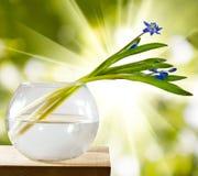 Bild des Schneeglöckchens in einem Vase auf einem Holztisch Stockbild