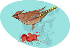 Bild des Vogels auf einer Niederlassung mit Sorbusbeeren und Lizenzfreies Stockfoto