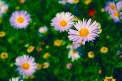 Bild einer Blume in einem Garten stockfotos