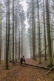 Bild einer Frau, die eine Papierkarte stillsteht auf einem Stamm eines gefallenen Baums unter hohen Kiefern im Wald betrachtet lizenzfreies stockbild