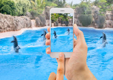 Bild einer Gruppe Delphine Lizenzfreie Stockfotografie