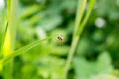 Bild einer kleinen Spinne Stockbilder