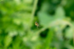 Bild einer kleinen Spinne Stockfotografie