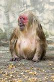 Bild eines Affen auf Naturhintergrund Stockfotos