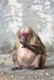 Bild eines Affen auf Naturhintergrund Stockfotografie