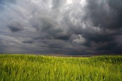 Bild eines grünen Weizenfeldes Lizenzfreie Stockfotos