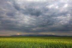 Bild eines grünen Weizenfeldes mit stürmischem Wolkenhintergrund Lizenzfreies Stockfoto