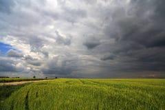Bild eines grünen Weizenfeldes mit stürmischem Wolkenhintergrund Stockfotografie