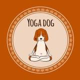 Bild eines lustigen Spürhunds der Karikatur Hunde, derauf Lotussitz von Yoga sitzt Stockbilder