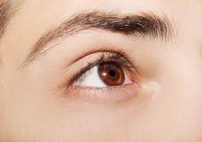 Bild eines menschlichen Auges des schönen verständnisvollen Blickes Lizenzfreie Stockfotografie
